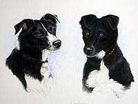 Portrait of Collie and Collie cross