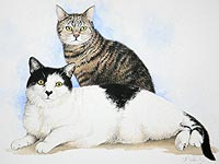pet portrait of two cats